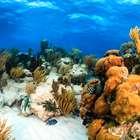 Estudo aponta que Grande Barreira de Corais vale US$ 42 bi