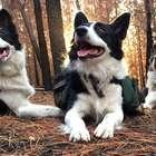 As três cadelas que estão reflorestando bosques ...