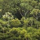 Modelo no País e no mundo, reserva no AM zera desmatamento