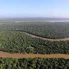 Amazônia: Noruega reduz pagamento ao Brasil por desmatamento