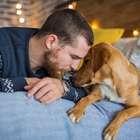 Cães tentam se comunicar com seres humanos, diz estudo
