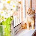 Energia das plantas e animais são importantes para o lar