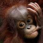 Zoo de Cingapura apresenta 500 filhotes recém-nascidos