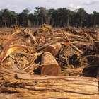 PF fecha esquema de exportação ilegal de madeira da Amazônia