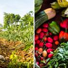 Curso de Agrofloresta Sintrópica ensina a plantar ...