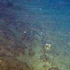 Ibama barra extração de petróleo em área de corais no AM
