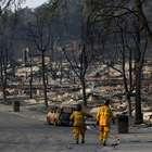 Cão desaparecido em incêndio na Califórnia encontra família