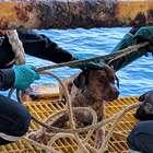 Cachorro é resgatado em plataforma de petróleo