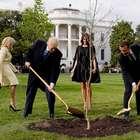 Macron enviará nova árvore a Trump