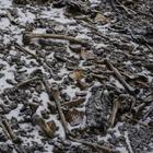 O mistério das centenas de ossadas humanas em lago ...