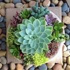 Jardim de Suculentas: Tipos, Como Cultivar, +67 Ideias ...