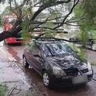 Árvore cai sobre carro no Parque São Paulo, em Cascavel