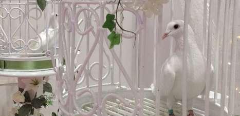 Pomba de aluguel é atração de feira de casamento em Londres
