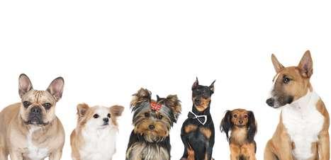 Qual cachorro representa sua personalidade?