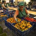 6 millones de trabajadores cobra menos que el salario mínimo