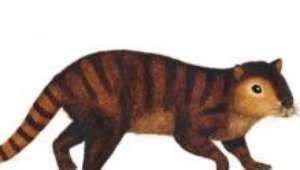 Conheça o mamífero que sobreviveu à extinção dos dinossauros