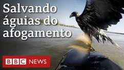 Duas águias são salvas de afogamento por caiaqueiros na Alemanha
