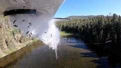 Milhares de peixes são lançados de avião em lago nos EUA