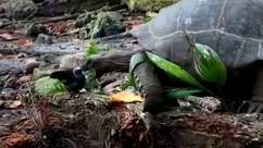 Tartaruga é filmada matando e comendo passarinho