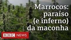 Por dentro dos gigantescos campos de maconha do Marrocos