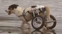 Cães deficientes vão à praia no Peru