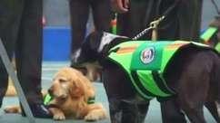 Equador aposenta 61 cães policiais com honras
