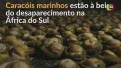 África do Sul: Caracóis marinhos ameaçados por pesca ilegal