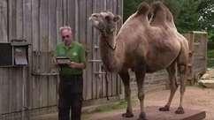 Como foi a pesagem anual de animais do zoológico de Londres