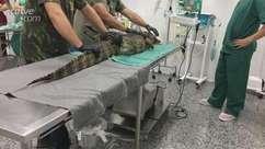 Jacaré fêmea é operado no Hospital Veterinário da FAG, em Cascavel