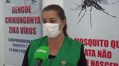 Mutirão contra a Dengue será realizado em Toledo