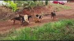 Moradora denuncia abandono de animais na região do Lago Azul, em Cascavel