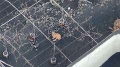 Drones salvam cães da morte ilhados por vulcão na Espanha