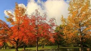 Devemos nos inspirar nas raízes das árvores, ensina vidente