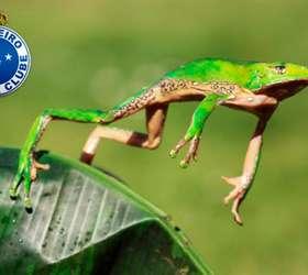 Qual Animal Representa Cada Clube Do Brasileirão Confira