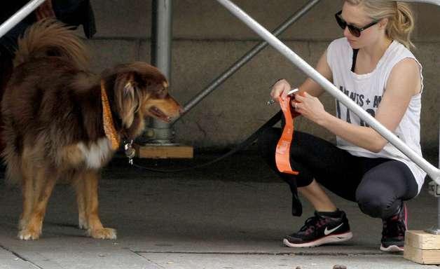 DNA ajudará a achar quem não recolhe cocô de cachorro da rua