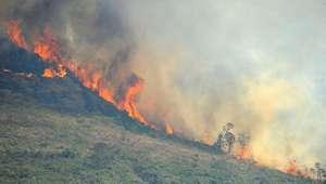 Brasil perde 1,8% de suas florestas em dois anos, diz IBGE
