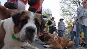 Son ya 18 perros envenenados en parque de México