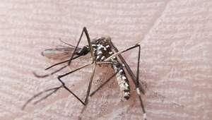 Casos de dengue chegam a 1,5 milhão; zika atinge 18 Estados