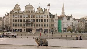 Los gatitos del #BrusselsLockdown como reclamo turístico