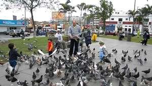 Barranco: multarán a quienes alimenten o crien palomas