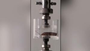 VIDEO: Cucaracha soporta 900 veces su propio peso