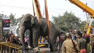 Elefante selvagem invade cidade da Índia e causa pânico