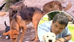 Dr. Vet irá al rescate de animales enfermos del Río Chillón