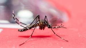 EUA investigam 14 casos de transmissão sexual de zika