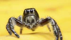 Araña le muerde el pene y casi muere
