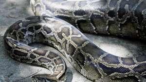 Un hombre sobrevive al ataque de una serpiente en el inodoro
