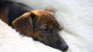 Mujer con cáncer terminal se despide de su perro como ...