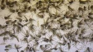 Ordenan suspender donaciones de sangre en Florida por zika