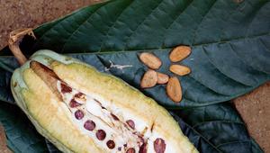 Semilla poderosa: 5 beneficios del cacao que no conocías