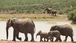 En 2020, el 67% de los animales se habrán extinguido
